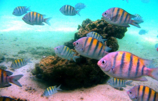 Peixes Nativos