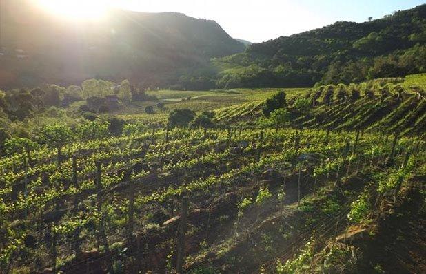 tour-vinicolas-imagem8.jpg