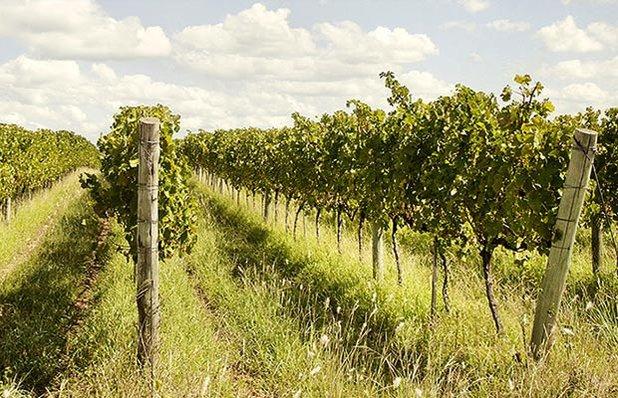 tour-vinicolas-imagem5.jpg