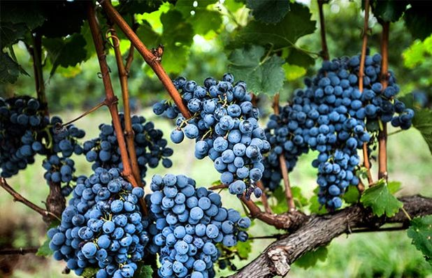 vinicolas-imagem.jpg