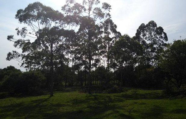 balneario-sitio-da-lagoa-day-use-camping-natureza.jpg