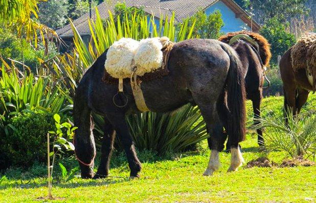 parque-tomasini-cavalo.jpg