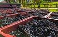 brocker-turismo-vinicola.jpg