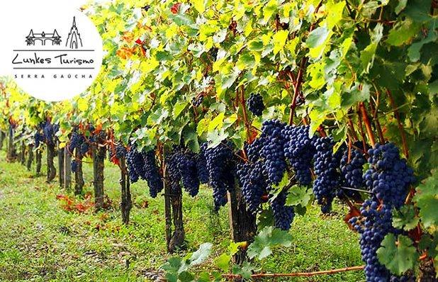 tour-vinicolas-lunkes-destaque.jpg